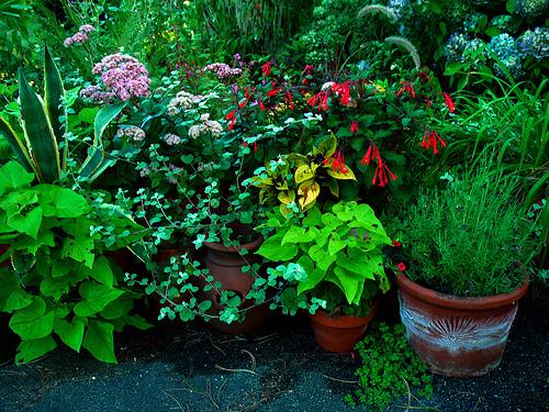 1583574304 838e8f73a8 Urban garden inspiration