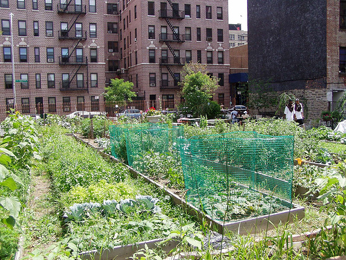 urban community garden Urban garden inspiration